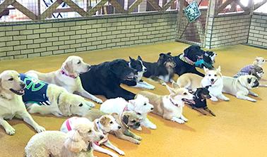 犬の保育園